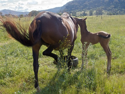 flick_and_foal