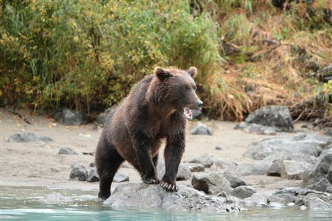 Crescent_Lake_Bear_Watching_8356_S1a