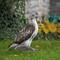 Hawk 050