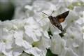 Moth - Delicious (p179687288)