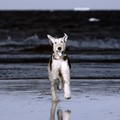 IR Beach Dog