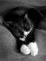 Penni Takes a Nap