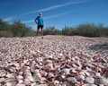 Hidden Beach of Clams