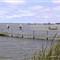 Goolwa River Scene