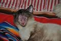 See Spot Yawn