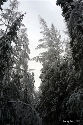 winter everergreen cathedral