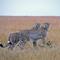 Horn of Africa-1-2
