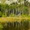 Beaver Pond 2007