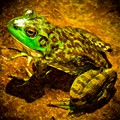 riddlers night out (bull frog)