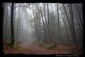 Fargorn forest