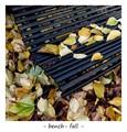 bench - fall