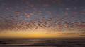 Cambria California Sunset