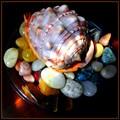 Seashell and pebbles
