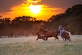 Quarter Horse Family Sunset Run