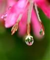 Drops after rain