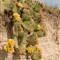cactus in badlands