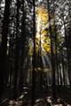 Leaves & Sun