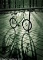 Holland Bikes-6