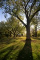 Bleodel Donovan Park Tree