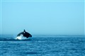 Orca08