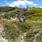 penguins-at-boulders-beach-25
