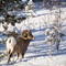 Bighorn_AbeLk-Jan14_531