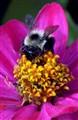 Bee close macro
