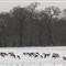2013 snow WPO 007