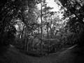 Hixon Forest