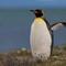 DPR Penguin