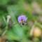 NorwegianBumblebee