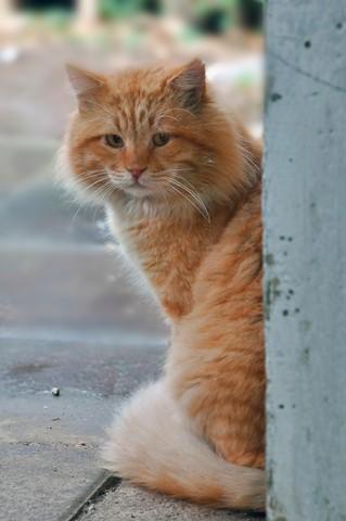 DSC_3830_cat
