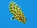 Spots under water