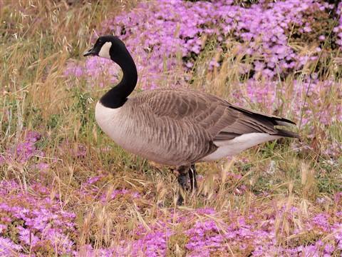 P5051545_Bird