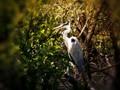 Heron. watching me watching you.