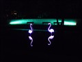 flamingos at night