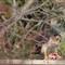 Hawk-Brampton-Ourg garden2