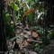 Vallée de Mai, Praslin, The Seychelles