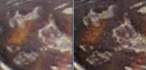 LTZ470 Samples - SX50 Fine vs FZ200 + Nikon TC - Turttles - Detail comparison 09