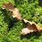 IMG_1575_lichen