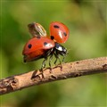 ladybug_takeoff_square