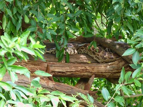 Python in Vizak zoo,india