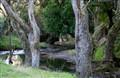 trees & stream