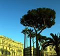 I hope i have the right name of those beautiful trees seen in Rome and Toscane