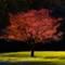 Tree ala Ventosa