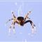 DP-Spider-1835