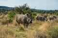Rhino shot in Namibia