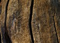 dead_wood