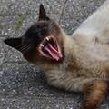 big_yawn