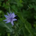 Cretan undergrowth